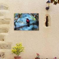 Outdoor Canvas Wall Art - Red Bird : buy Outdoor Canvas ...
