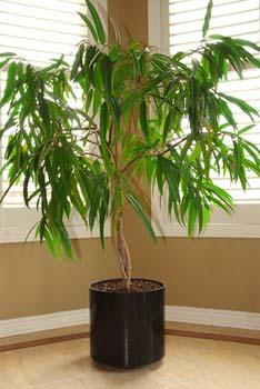 Regar las plantas de interior o en maceta