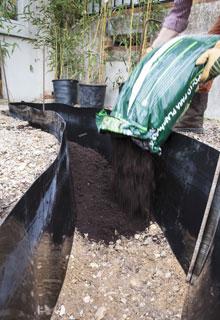 plantation d une haie de bambou