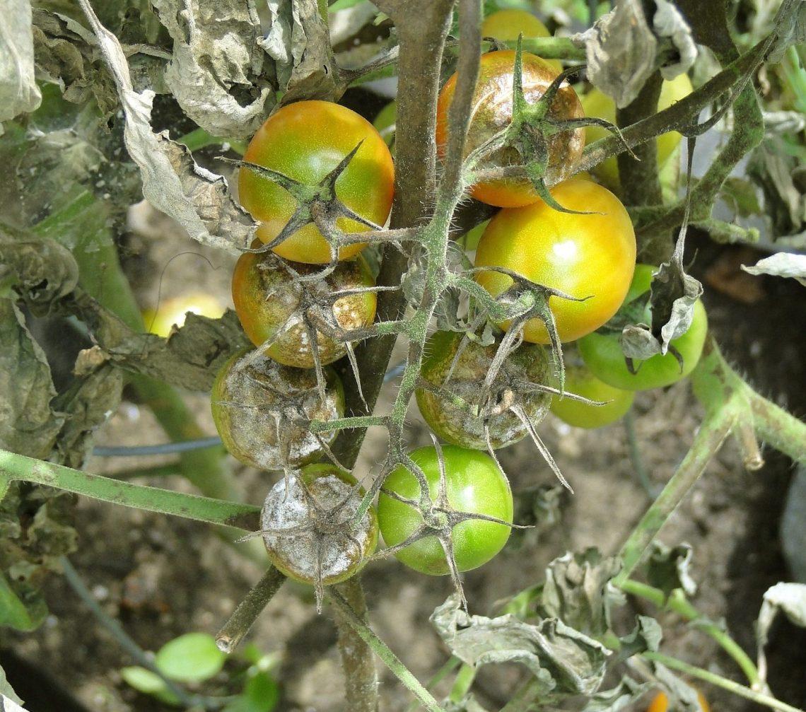 Plani-Décor-Conférence-Principales maladies des végétaux