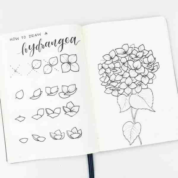 How to draw a hydrangea.