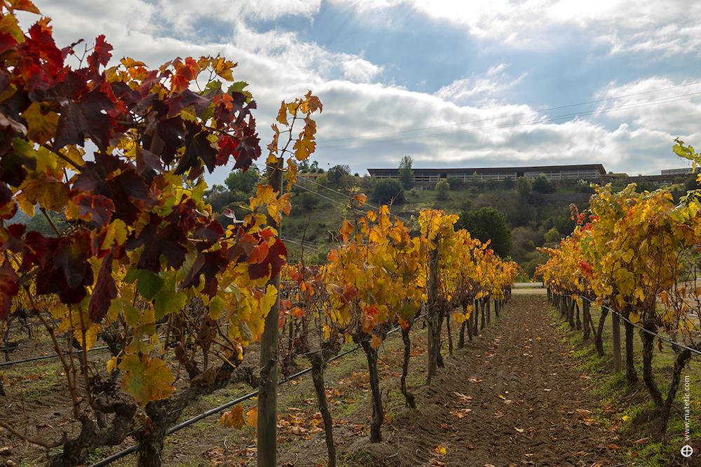 Matetic Vineyards & Wine Cellar, Chile