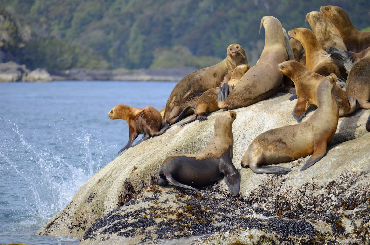 Cruising the Chilean Fjords - Wildlife Viewing