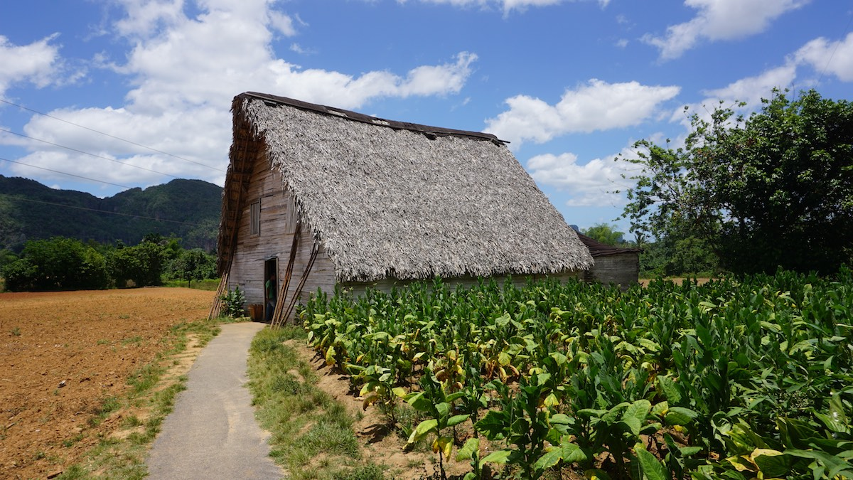 Vinales, Cuba - Tobacco Plantation | Plan South America