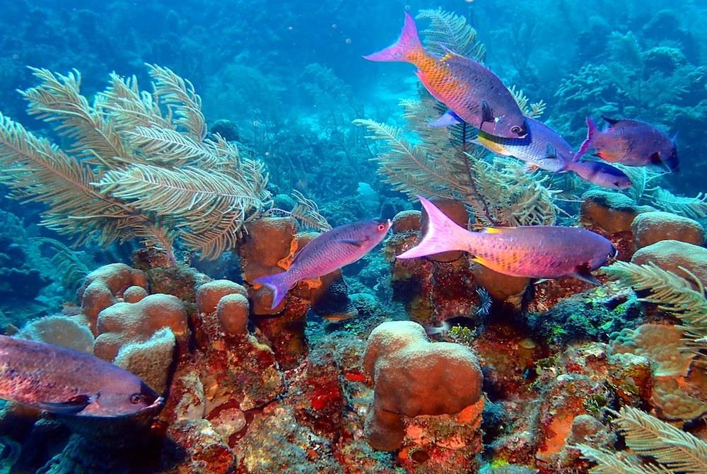 Plan South America   Belize,