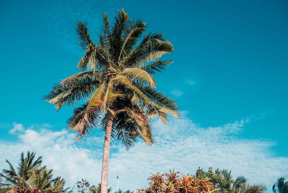 Plan South America   Palm trees, Belize