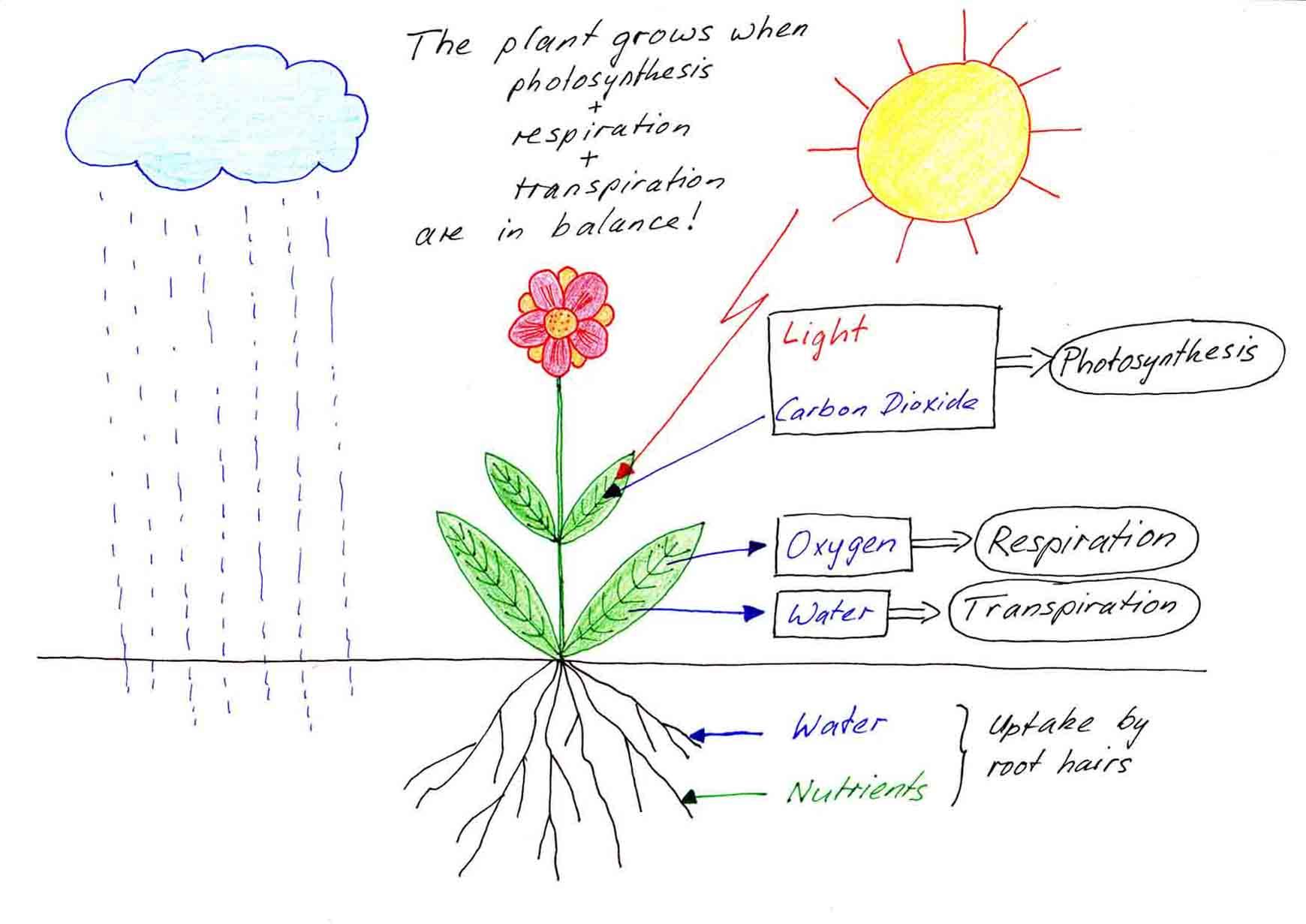 Fhs Bio Wiki Plants
