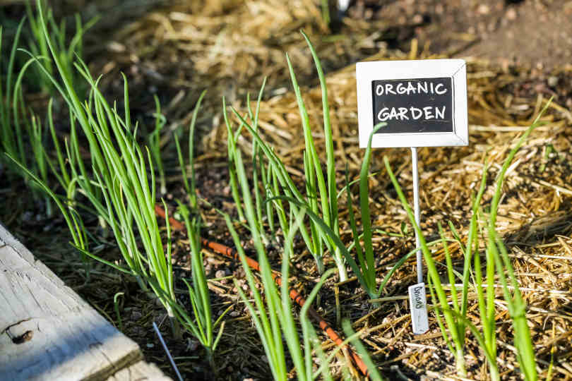 Organic garden marked with plant label