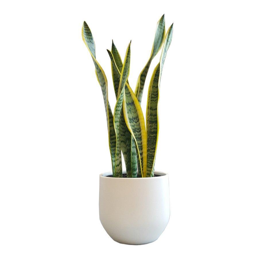 House Indoor Plants
