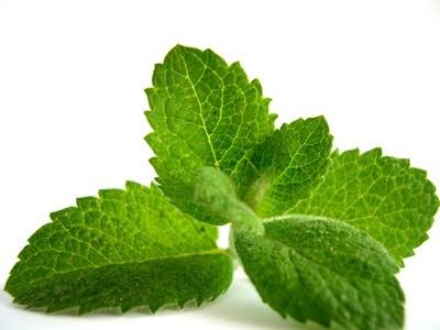Menta: Planta relajante, útil contra Resfriados, para la Digestión y más