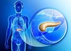 Desintoxicar el Páncreas con Plantas Medicinales