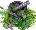 12 Plantas Medicinales que pueden ayudarte a mejorar tu salud