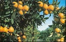 Árboles frutales en el jardín