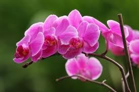 Las orquídeas  2