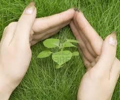 Protegiendo las plantas