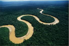 Plantas Medicinales de la Amazonía – Reconocimiento en USA