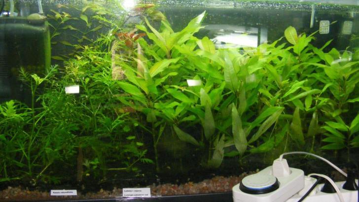 Abono para plantas acuáticas, casero o comprado