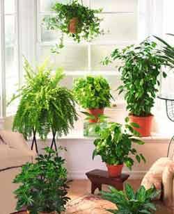 Aspectos para estudiar una planta