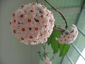 Plantas curiosas 2