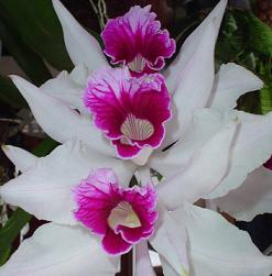 Detalles sobre el cuidado de orquídeas