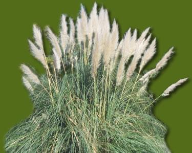 Plantas para climas secos