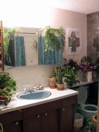 Plantas en los baños