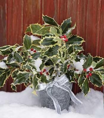 Nieve en las plantas