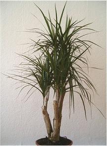 Plantas para purificar el ambiente