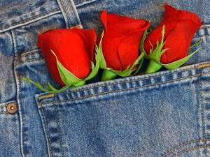 Wallpapers de rosas 7