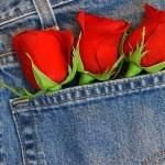 Wallpapers de rosas 7