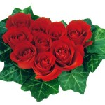 Wallpapers de rosas 8