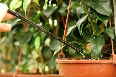Mejorar el drenaje de las plantas