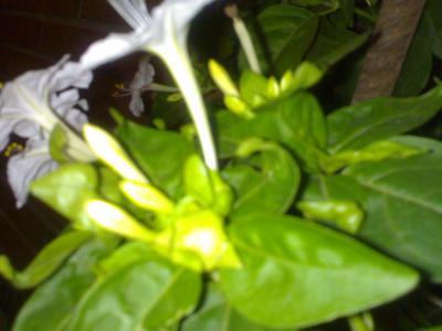 Las plantas más olorosas