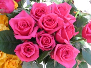 Hongos que afectan a las rosas
