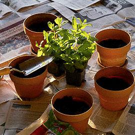 Consejos para trasplantar plantas