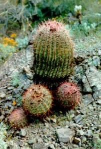 Mantener la vida de los cactus