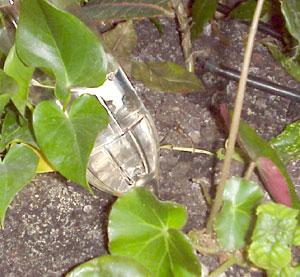 Cómo mantener la humedad de las plantas en verano