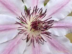 Flores hechas con macro 6