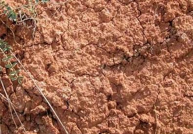 Cómo mejorar el suelo arcilloso