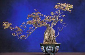 Cortar las raíces de los bonsáis
