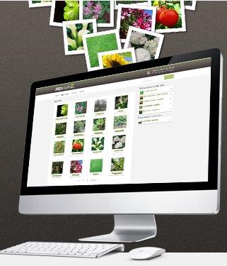 Una red social para amantes de las plantas