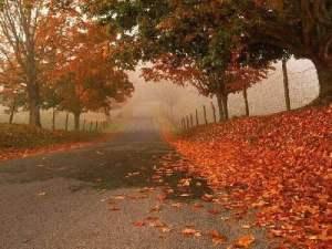 Plantas y el otoño
