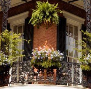 Consejos para plantas en balcones
