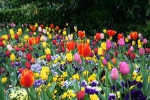 El color en el jardín