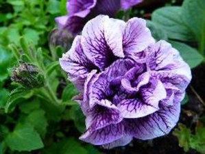 Disminuye el aroma de las flores