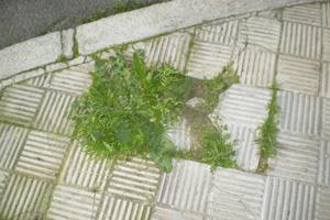 Plantas invasivas en caminos