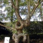Arborsculpture 2