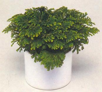 Plantas para el interior