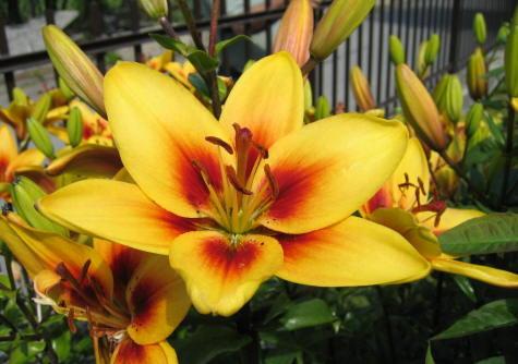 El significado de las flores amarillas
