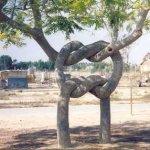 Arborsculpture 4